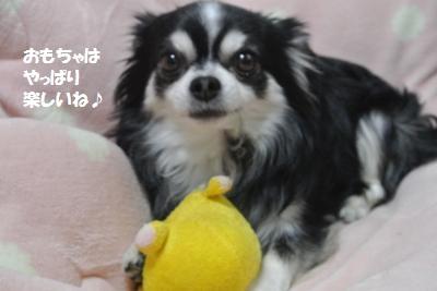 DSC_0528_convert_20150302094548.jpg