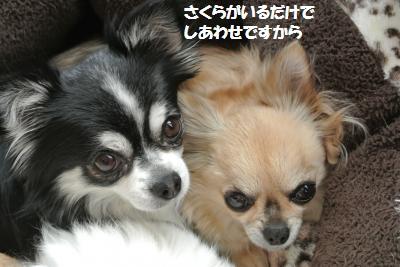 DSC_0530_convert_20150302094147.jpg