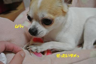 DSC_0580_convert_20150306160543.jpg