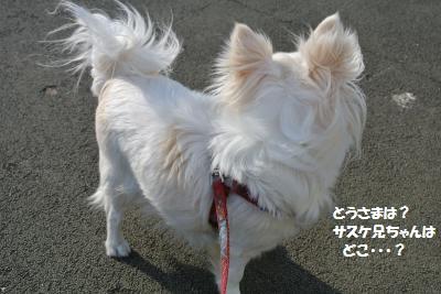 DSC_0942_convert_20150331100628.jpg