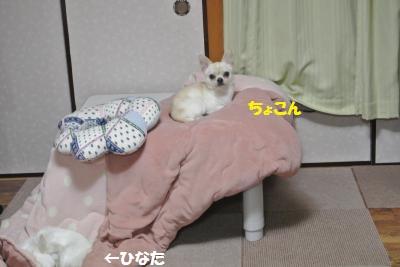 DSC_1038_convert_20150407095641.jpg
