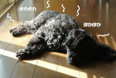 DSC_1228_convert_20150415101951.jpg