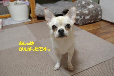 DSC_1415_convert_20150428095441.jpg