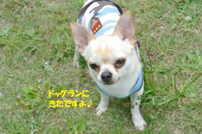 DSC_1620_convert_20150507100601.jpg