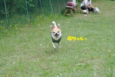 DSC_1648_convert_20150507100708.jpg