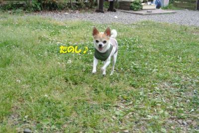 DSC_1832_convert_20150514093925.jpg