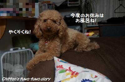 DSC05135_convert_20150326193927.jpg