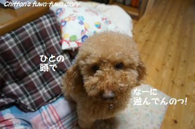 DSC05263_convert_20150405204743.jpg