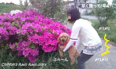 DSC_1146_convert_20150526212332.jpg