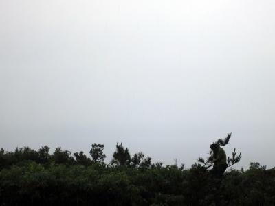 150503-215=松の木枝打by正剛