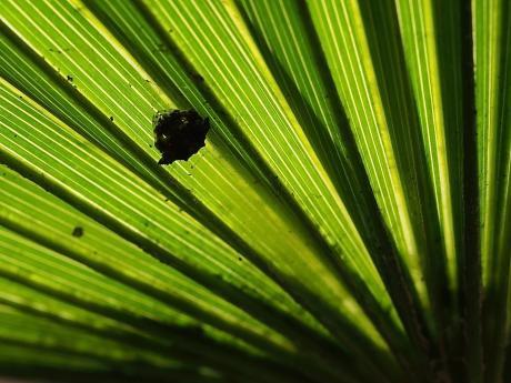 ワクドツキジグモ幼体