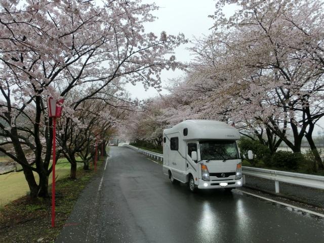 2015,4,12 桜とバザーとetc 007