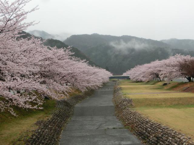2015,4,12 桜とバザーとetc 010