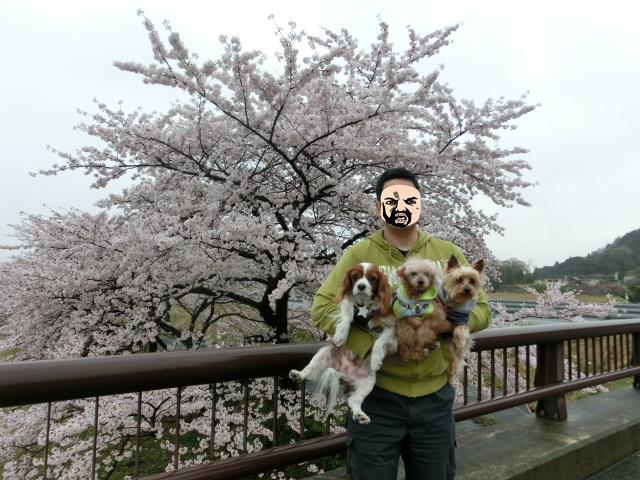 2015,4,12 桜とバザーとetc 034