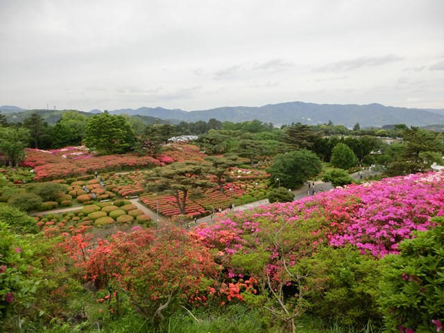 s-2015,5,5 伊豆と富士山芝桜 028