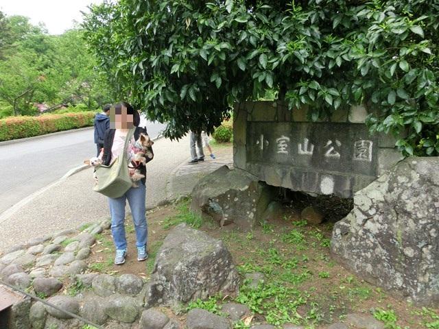 s-2015,5,5 伊豆と富士山芝桜 019