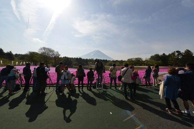 s-2015,5,5 伊豆と富士山芝桜2デジイチ 018