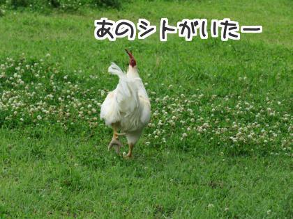 二太2015/06/28-3