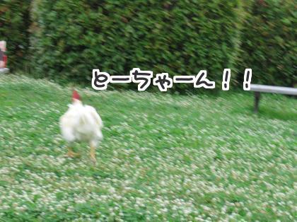 二太2015/07/04-3