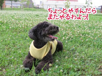 二太2015/07/04-6