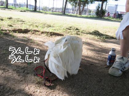二太2015/07/26-4