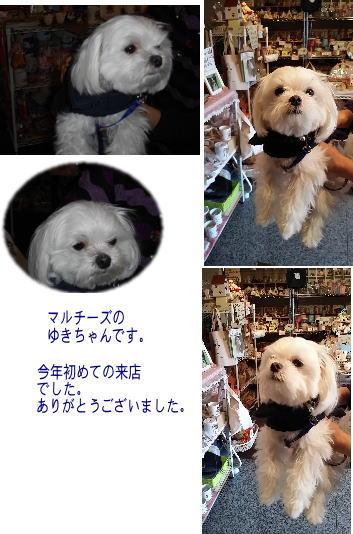 20150312ゆきちゃん