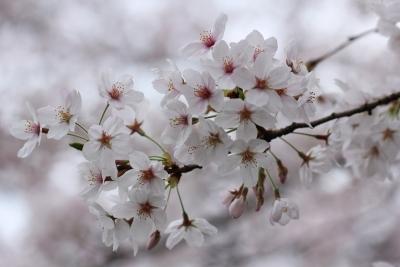 shuku-IMG_8887.jpg