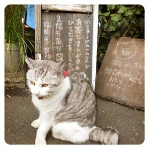 ムギマル2の看板猫その1
