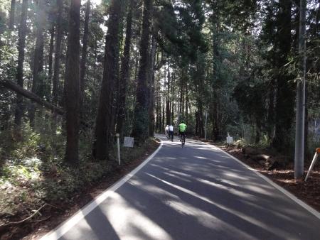 038そして、こんな林道を通り