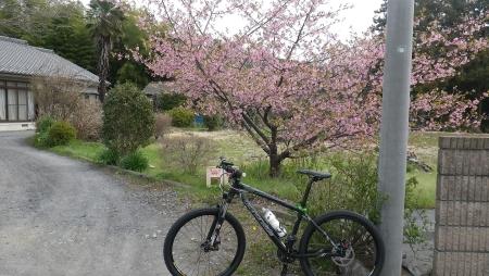 003民家?梅の花がキレイ