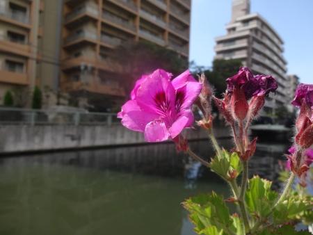 057花を撮る趣味は無いけれど・・