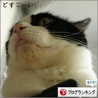 dai20150630_banner.jpg