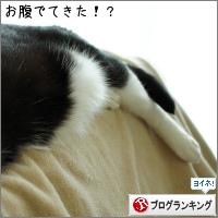 dai20150710_banner.jpg