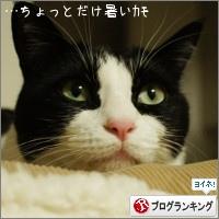 dai20150714_banner.jpg