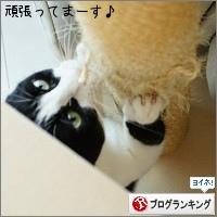 dai20150715_banner.jpg