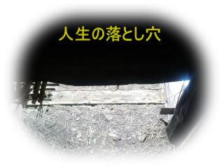 zc2.jpg