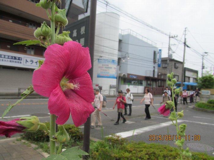 20150614miyamae07.jpg