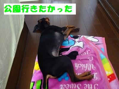 s-20150110注射 (2)