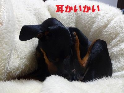 s-耳かいかい (7)