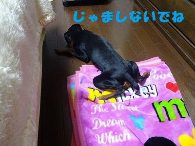 s-201501お父さん毛布 (4)