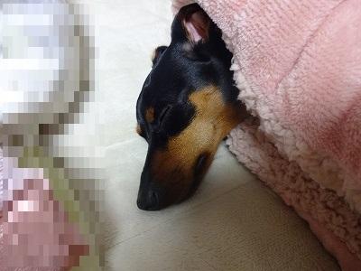 s-201501寝室ホイホイ (5)