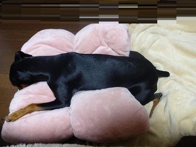 s-201501寝室ホイホイ (8)