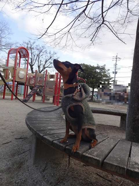 s-20150205公園 (2)