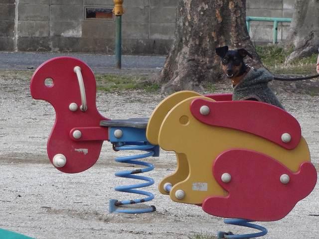 s-20150205公園 (5)