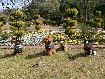 s-20150221公園 (3)