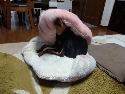 s-たてホイ (5)