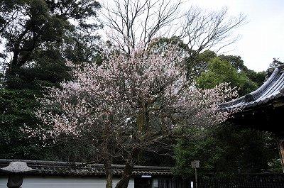 s-京都1 (4)