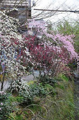 s-京都2 (8)