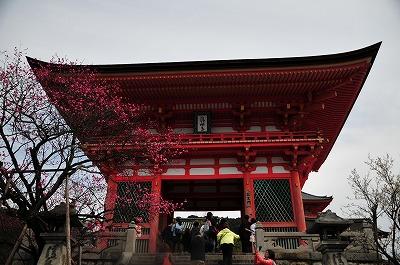 s-京都2 (15)