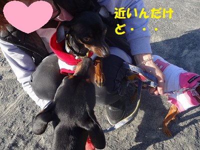 s-0327ぷーぴー (29)